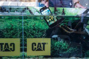 Cat, Pop Up Advertising Beograd